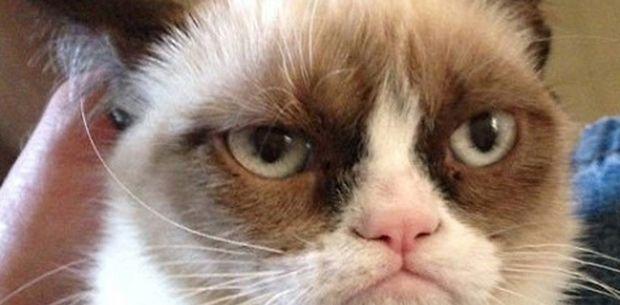 355166-grumpy-cat-au-cinema-620x0-1